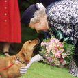 La reine Elizabeth II caresse un corgi lors d'une visite en mai 1998.