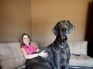 Voici le plus grand chien du monde !