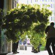 Dans la semaine précédant le mariage, la décoration florale, incluant huit arbres (érables et charmes) de 6 mètres de haut, ont été implantés dans l'abbaye de Westminster.