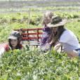 Rachel Bilson et ses deux petites soeurs récoltent des légumes à la ferme. Los Angeles, 26 juin 2011