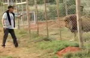 VIDEO + PHOTOS : Yves Rénier, son lion ne lui dit pas merci...