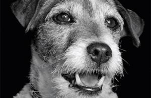 Uggie, le chien de The Artist, se mobilise pour PETA