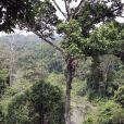 Le prince William et son épouse Kate Middleton se sont retrouvés à 40m de hauteur dans un arbre lors de leur visite dans la forêt tropicale de Sabah sur l'île de Borneo le 15 septembre 2012