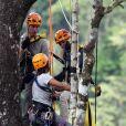 Le prince William et son épouse Kate Middleton écoute les consignes perchés dans un arbre à 40m du sol lors de leur visite dans la forêt tropicale de Sabah sur l'île de Borneo le 15 septembre 2012