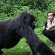 Sonia Rolland rendant visite à la famille des gorilles Sabignwo, au Rwanda, le 29 novembre 2012.