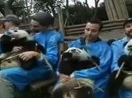Backstreet Boys : Pour son retour, le boys band culte chante avec des pandas !