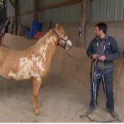 L'amour est dans le pré 8 : Thomas poursuivi pour 'cruauté' envers son cheval