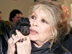 Brigitte Bardot défend le caca d'oie !