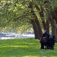 Le duc d'Edimbourg, mari d'Elizabeth II, s'est adonné à la conduite d'attelage le 15 mai 2014 au Royal Windsor Horse Show, où il est juré de cette même discipline hippique.