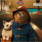 ''Paddington'' : L'ours qui va vous faire craquer