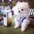 Paris Hilton a ajouté une photo sur son compte Instagram le 1er février 2015
