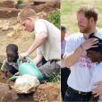 Le prince Harry plantant un pêcher (à g.) au Lesotho avec Mutsu Potsane, alors âgé de 4 ans, lors de leur première rencontre, en mars 2004, et le retrouvant bien grand (à d.), en novembre 2015.