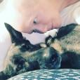 Shannen Doherty se bat contre le cancer du sein et garde le sourire grâce à sa chienne. Photo publiée sur Instagram le 25 octobre 2016