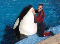 """Mort de Tilikum, la plus célèbre orque du monde et star de """"Blackfish"""""""
