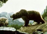 Mort de l'une des ourses du film mythique de Jean-Jacques Annaud