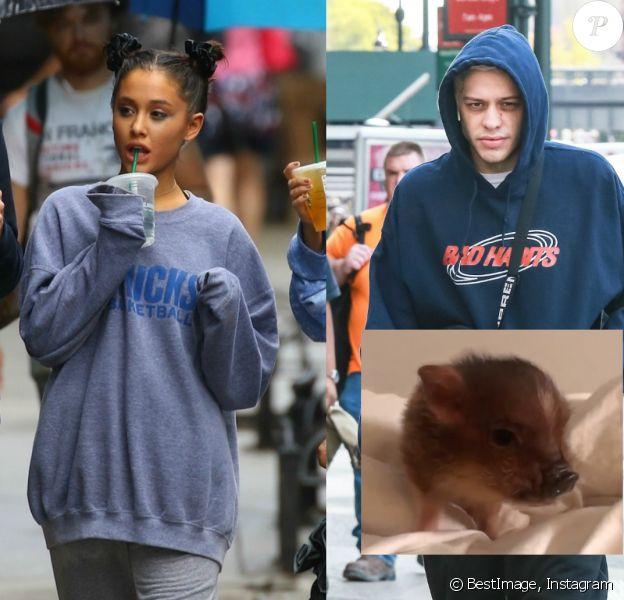 Avant de rompre, Ariana Grande et Pete Davidson avaient adopté ensemble un cochon domestique.
