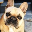 Ginette, la chienne de Laurent Kerusoré - photo Instagram, le 13 juin 2019