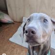 Lucho, le nouveau chien adopté par Eva Mendes et Ryan Gosling, juillet 2019.