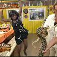 Aaaargh ! un serpent !