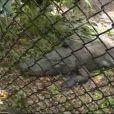 Visite des reptiles dans Les Anges de la télé-réalité 5 le mercredi 6 mars 2013 sur NRJ 12