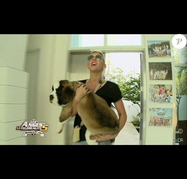 Les Anges découvrent un chien dans les Anges de la télé-réalité 5, vendredi 8 mars 2013 sur NRJ12 - Amélie et Angel