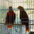 Les perroquets de la volière de Rio ( Les Marseillais à Rio  - épisode diffusé le mercredi 30 avril 2014.)