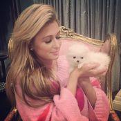 Paris Hilton : Une somme astronomique pour s'offrir deux nouveaux chiots...