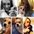 Carrie Underwood a ajouté une photo de ses chiens sur sa page Instagram / 2015