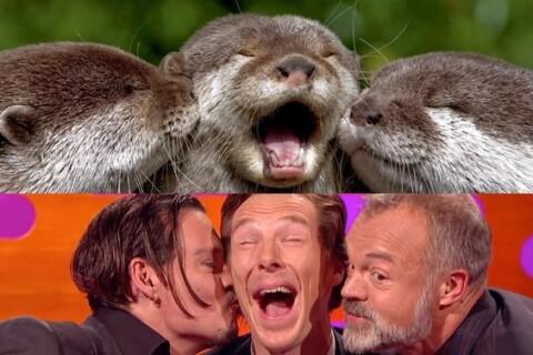 Benedict Cumberbatch: Délirant sosie de loutres face à Johnny Depp déconcerté