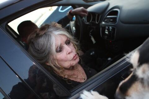 """Brigitte Bardot, """"mégère vociférante"""" : En voiture, elle a foncé sur un comédien"""