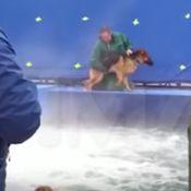 A Dog's Purpose : Un chien-cascadeur maltraité, la vidéo choque la Toile