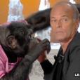 """Un chimpanzé s'en prend à Robert Charlebois sur le plateau de """"Salut les Terriens !"""" sur C8. Le 7 octobre 2017."""