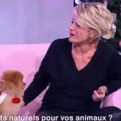 Sophie Davant mordue en direct par un chien !