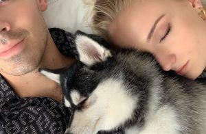 Sophie Turner et Joe Jonas : Leur chien Waldo tué, les jeunes mariés choqués