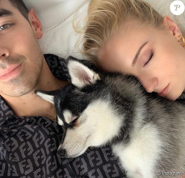 Joe Jonas et Sophie Turner en pleine sieste avec l'un de leurs deux chiens de race alaskan klee kai, Porky et Waldo, en juin 2019, photo Instagram.