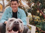 Henry Golding (Crazy Rich Asians) : Son nouveau pitbull agresse un chien