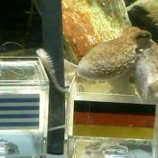 Rencontrez Paul, le poulpe devin... Il prédit la victoire de l'Espagne !