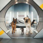 Regardez le résultat quand des chats et des chiens se prennent pour... James Bond !