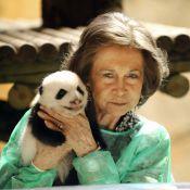 La Reine Sofia d'Espagne pouponne... deux adorables pandas !