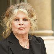 Brigitte Bardot et Dany Saval dénoncent un trafic de chiens !