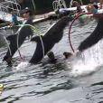 Les dauphins dans les Anges de la télé-réalité 2 : Miami Dreams, sur NRJ 12 le 21 juin 2011.